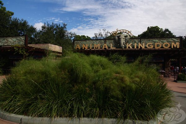 Animal Kingdom Entrance